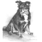 black-red-white dog drawing by Mike Theuer