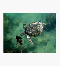 Galapagos Green Sea Turtle Photographic Print