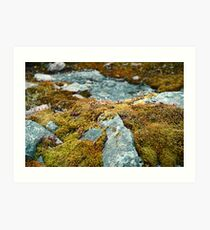 Moss and Stone Art Print