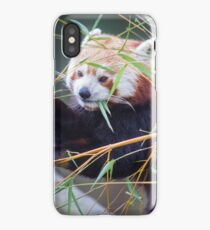 Red Panda iPhone Case/Skin