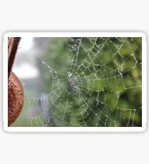 Dew Covered Web Sticker