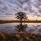 Wooden Reflection by David Haworth
