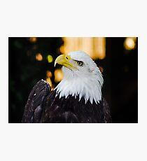 Eagle on Vancouver Island Photographic Print