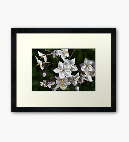 White with Yellow Framed Print