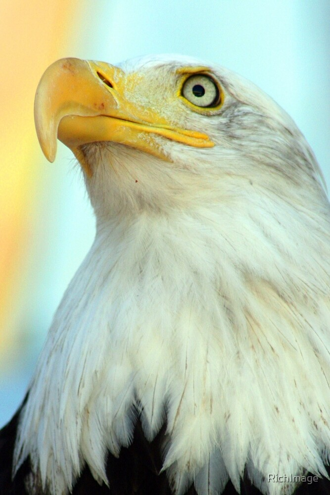 Eagle  by RichImage