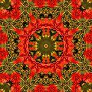 Camellia Array by Elaine Teague