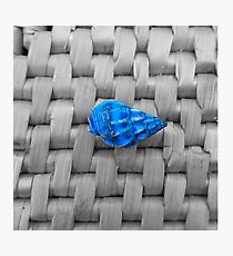 This Blue Shell  Photographic Print