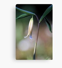 Straw Lily Canvas Print