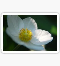 White Flower 4 Sticker