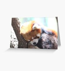 The Red Panda Greeting Card