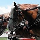 Horsefest 012 by BarbBarcikKeith