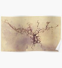 Olfactory bulb neuron - pencil and watercolor Poster