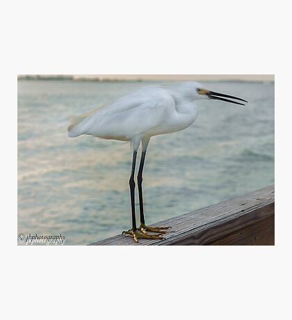 Just Hanging Out at the Pier Photographic Print