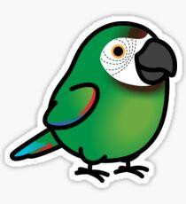 Chubby Severe Macaw Sticker