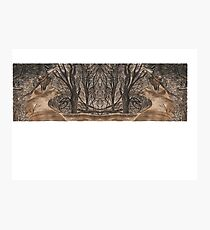 Mirror landscape Photographic Print