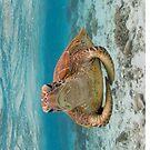 Turtle yoga - horizontal by Kara Murphy