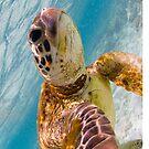 Sea turtle selfie by Kara Murphy
