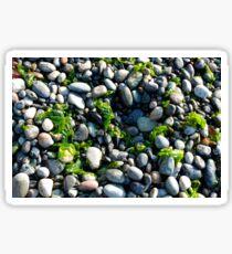 Seaweed and Rocks, Lopez Island Sticker