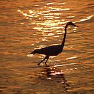 Egret Sunset by Bob Hardy