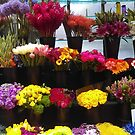 Frisco Flowers by RobynLee
