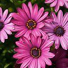 Purple Flowers by DevilsHole