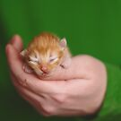 Kitten a few days old in the hand by yana-shonbina