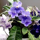 PURPLE FLOWERS COLLECTION by Shoshonan