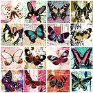 Butterflies 1 by Carolynne