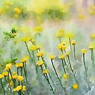 Spring in Goulburn  by Candy Jubb