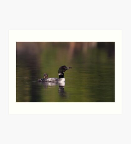 Wake-up call - Common loons Art Print