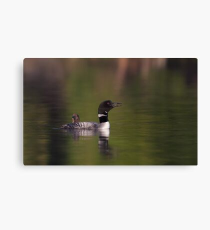 Wake-up call - Common loons Canvas Print