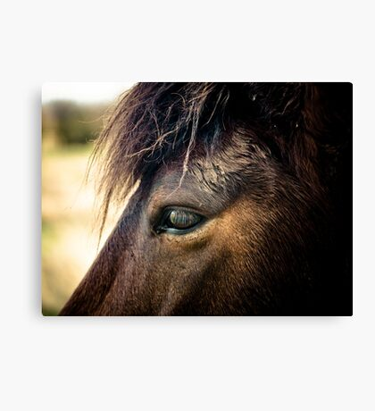 Spirit of The New Forest Canvas Print