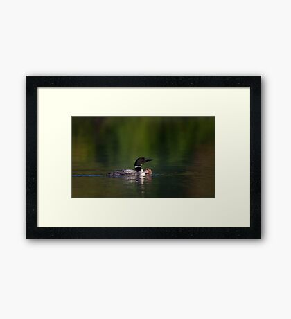 Common loon and chick Framed Print