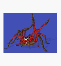 Spider Spider Photographic Print