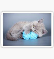 Charming fluffy kitten British cat Sticker