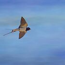 Swallow flight by M S Photography/Art