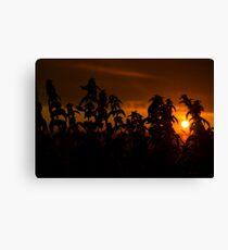 beautiful sunset through the wild nettles Canvas Print