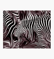Knee Deep in Brown Zebras  Photographic Print