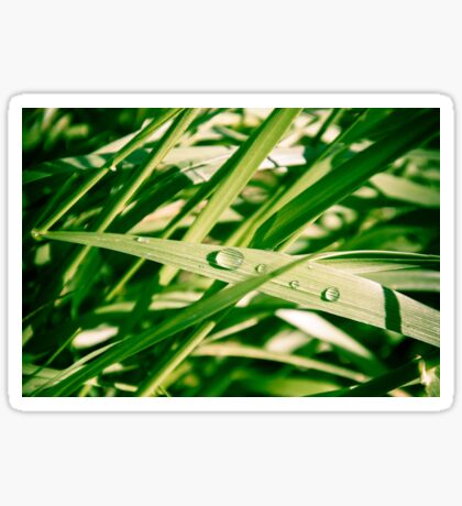 Water drops on Grass Sticker