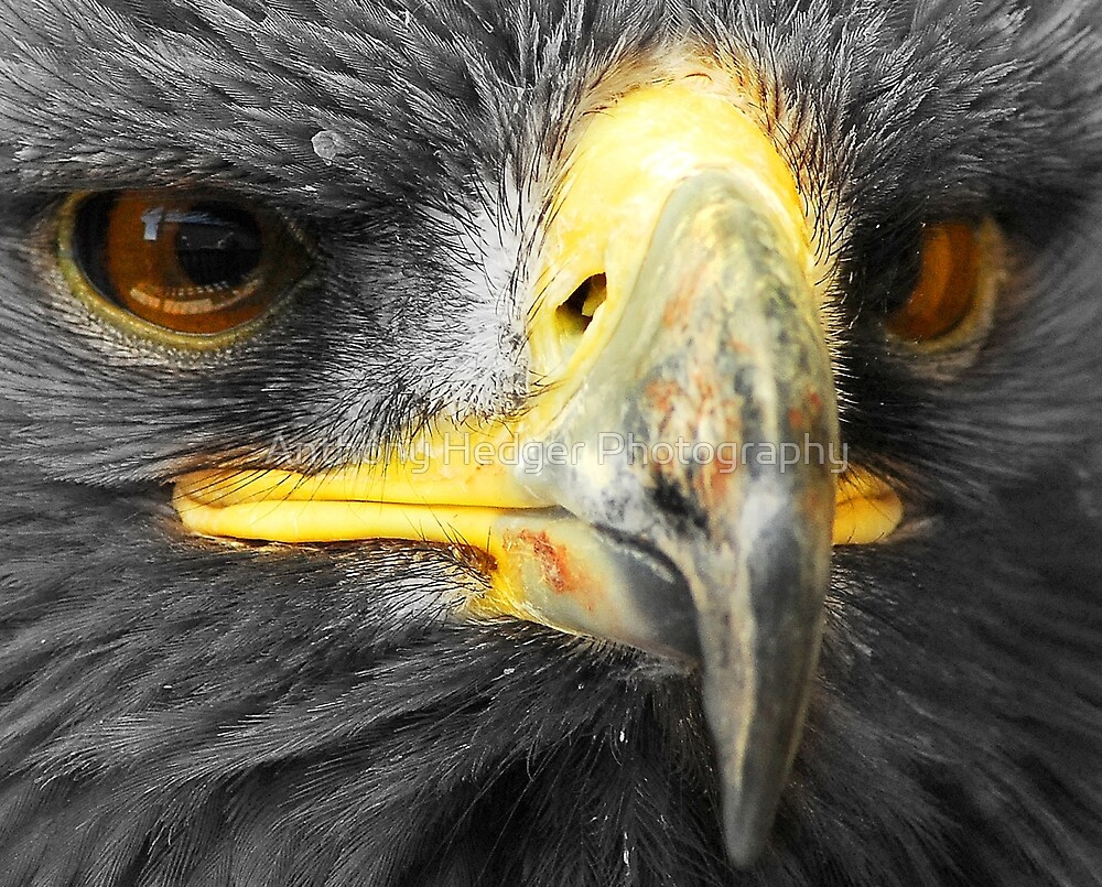 Up close and personal by Anthony Hedger Photography
