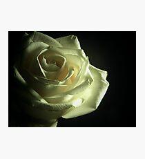Simplistic Rose  Photographic Print