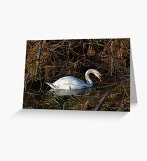Swan on the River Ouse England UK Greeting Card