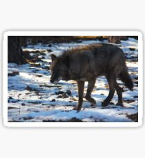 """""""Timber Wolf on the Prowl"""" Sticker"""