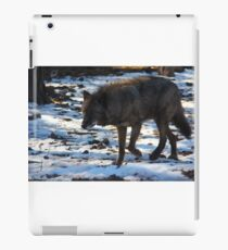 """""""Timber Wolf on the Prowl"""" iPad Case/Skin"""