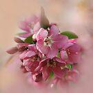 Pink Heaven by EbyArts