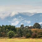 1158 Distant View by DavidsArt
