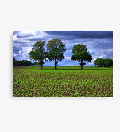 A Green Field & Dramatic Sky Canvas Print