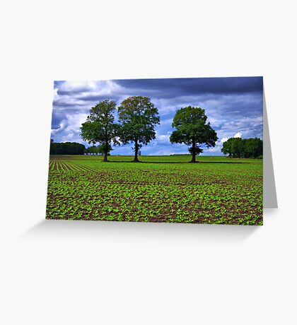 A Green Field & Dramatic Sky Greeting Card