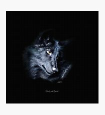 """""""The Look Back"""" Timber Wolf Portrait Photographic Print"""