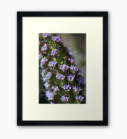 Pride of Madeira Framed Print
